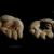 Thumb-1316395404