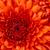 Thumb-1270172084